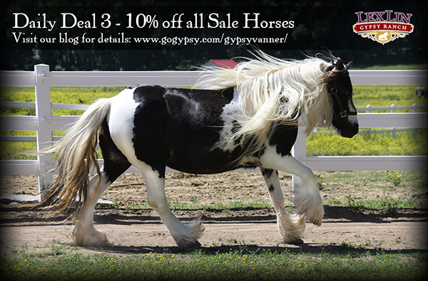 Daily Deal - All Horsesweb