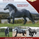 LexLin-Gypsy-Ranch-Blue-SteeleGypsyStallion