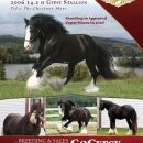 LexLin-Gypsy-Ranch-Gentleman-Jack-Gypsy-Stallion