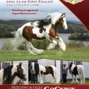 LexLin-Gypsy-Ranch-Sir-Maverick-Gypsy-Stallion