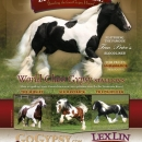 LexLinRanch-Live-the-Dream-Stallion-Flyer
