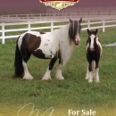 Mares-for-Sale-Section-Cover