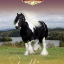 Stallion-Section-Cover