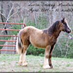 Smoky Mountain Bullet - Testimonial