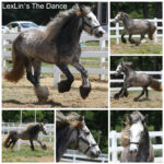 The Dance Collage