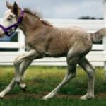 WL Filly 5