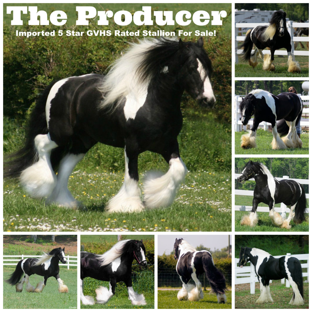 the-producer-collage