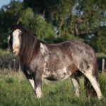 1162012-06-EquineOriginals-4727