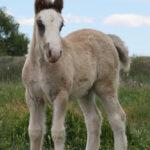 Zayna at 6.5 weeks old